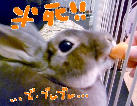 20120108:にんじん