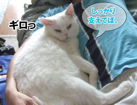 100622_メメタ1