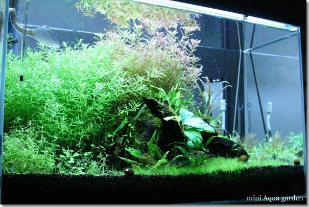 60cm_20110211.jpg