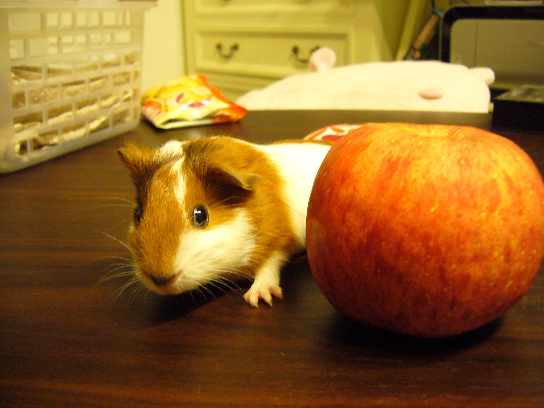 りんごよりちっちゃ。