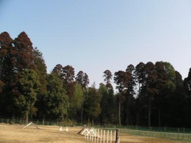 20110226.jpg