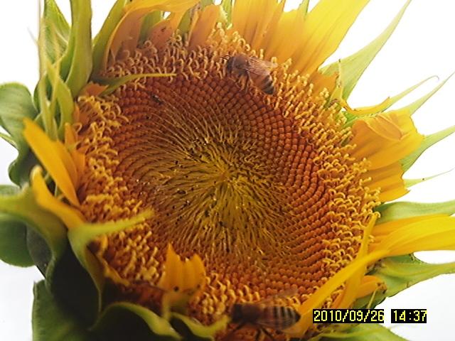 SUNP0140.jpg