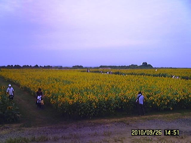 SUNP0147.jpg