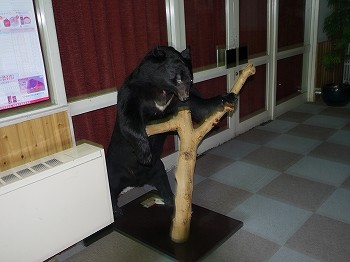 熊が、、、お出迎え