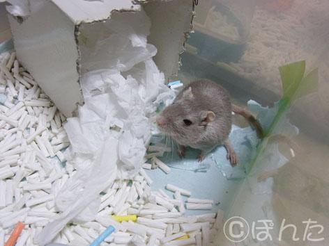 あんず子_2012正月_4