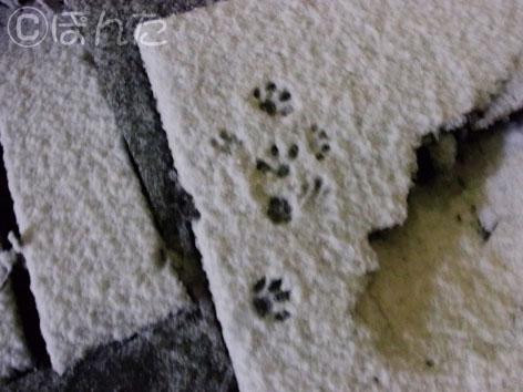 雪2012_2