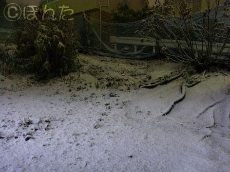 雪2012_1