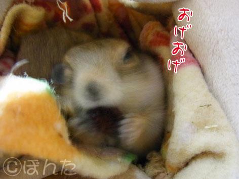 ぴきぴき_くれくれ2