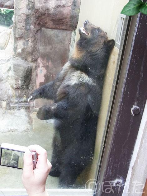 上野動物園2_6