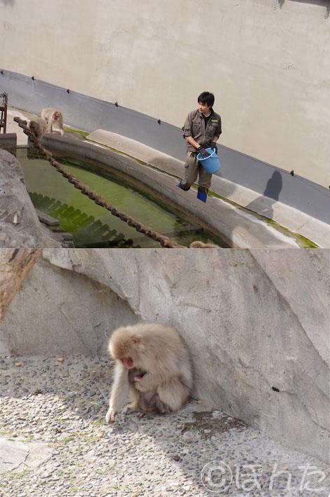 上野動物園2_5