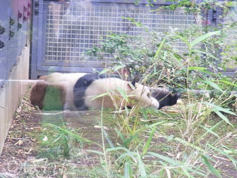 上野動物園2_4