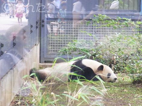 上野動物園2_3