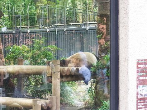 上野動物園2_2