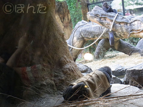 上野動物園2_11