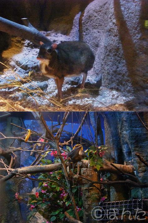 上野動物園2_9