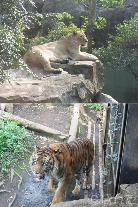 上野動物園2_7