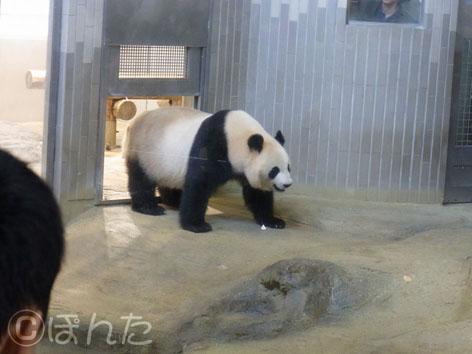 上野動物園2_15