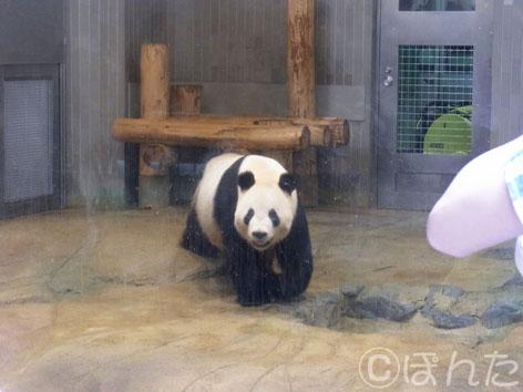上野動物園2_14