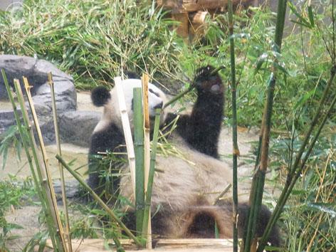 上野動物園2_19