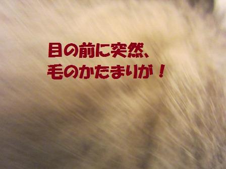 110604-1.jpg