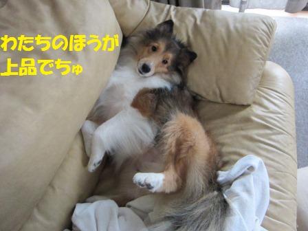 IMG_0495.jpg
