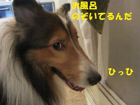 IMG_2920.jpg