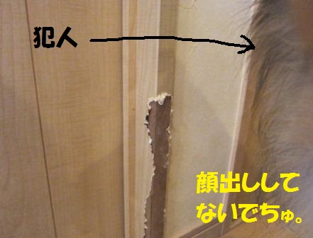 IMG_7993.jpg