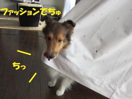 IMG_9438.jpg