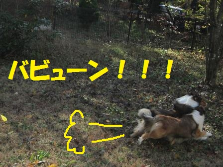 IMG_9461.jpg