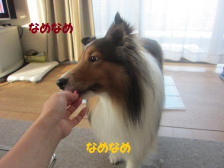 ashi2.jpg