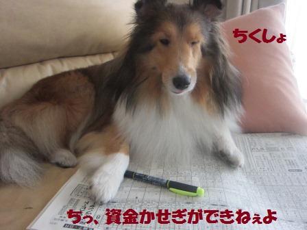 doyo2.jpg