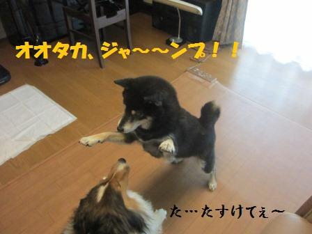 kaji2.jpg