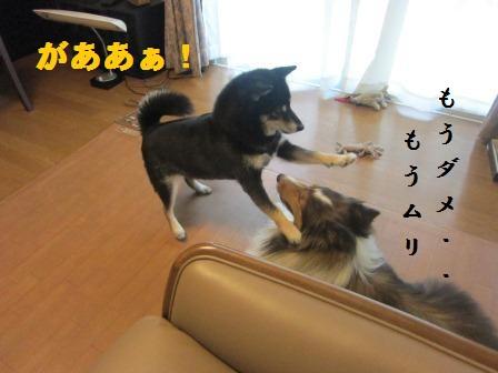 kaji6.jpg