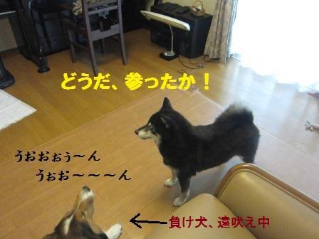 kaji8.jpg