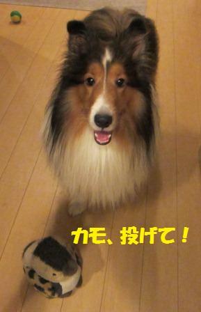 kamokamo1.jpg