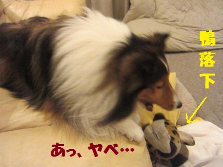 kamokamo3.jpg