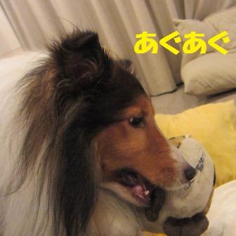 kamokamo5.jpg