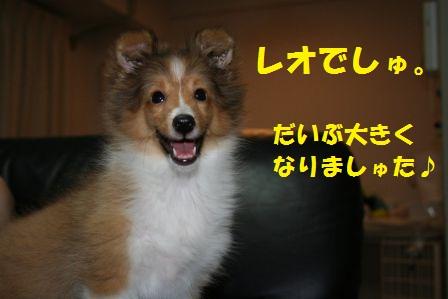 leoleo5.jpg
