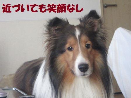 utagai5.jpg