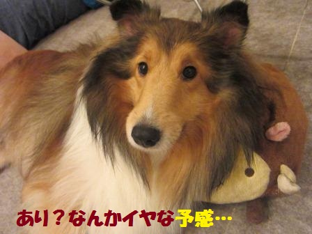 yoiyo3.jpg