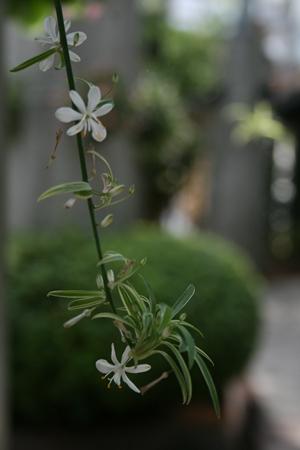 EGGの花