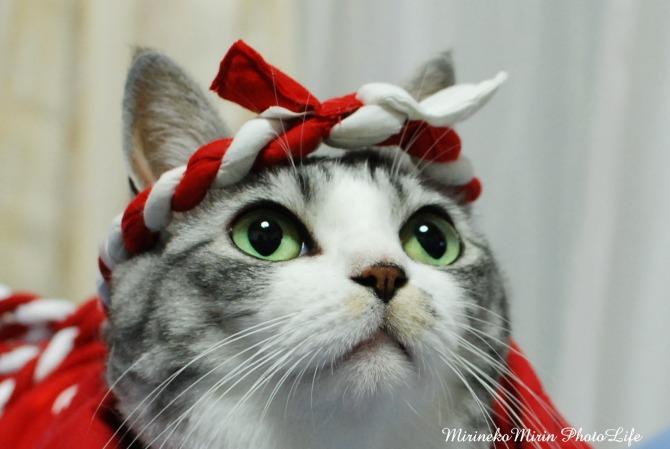 はっぴ猫2
