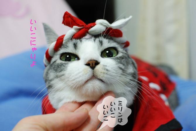 はっぴ猫4