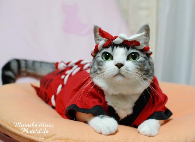 はっぴ猫1