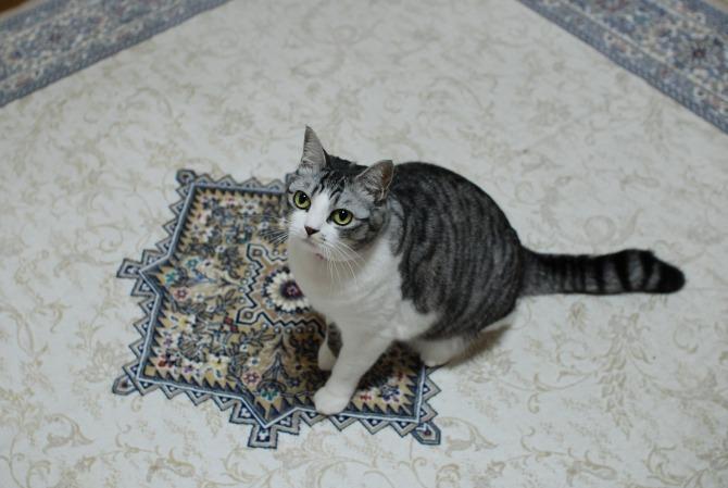 THE CAT-5