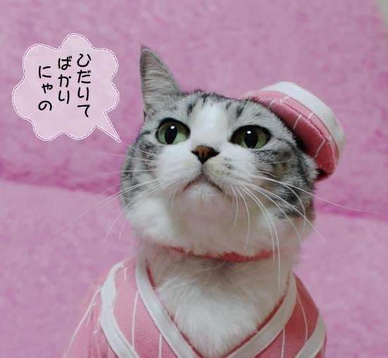 ピンクレディーにゃん2