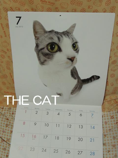 THE CAT-3