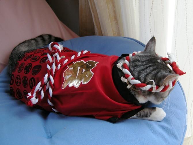はっぴ猫3