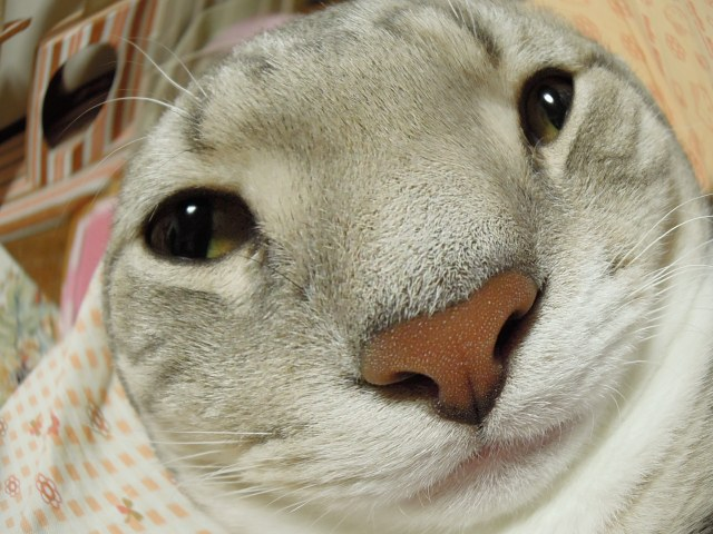 なんちゃってTHE CAT2