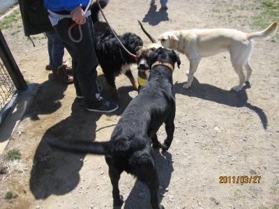 名犬牧場4